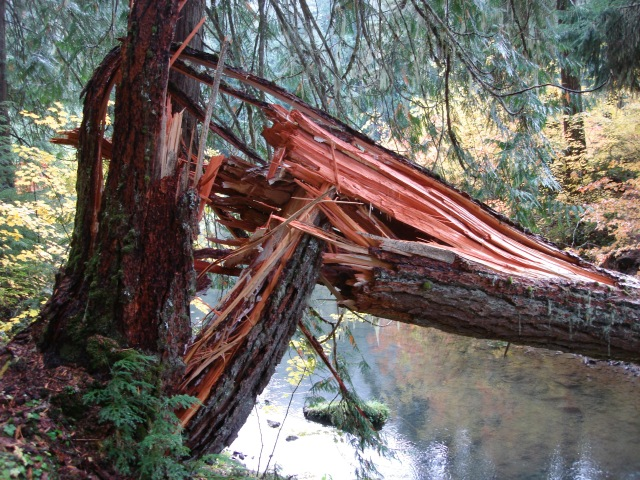 Greenwater Trail #7
