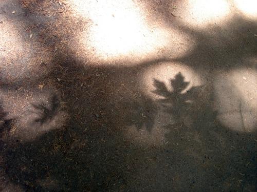 Shadow leaf