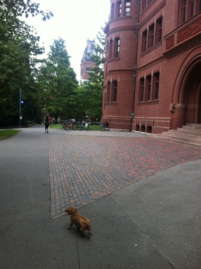 Kuma's life-long dream was to attend Harvard. And pee in the Yard.