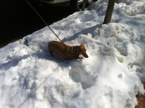 Always keep your wiener on ice.