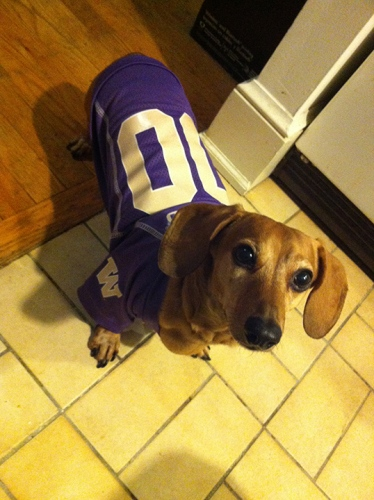 A True DC Dawg