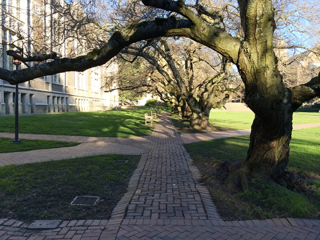 This is the UW Quad on camera. Any questions?
